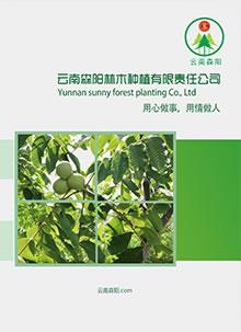 林木种植企业宣传册设计